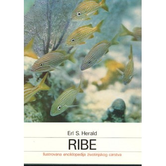 Erl S. Herald: Ribe